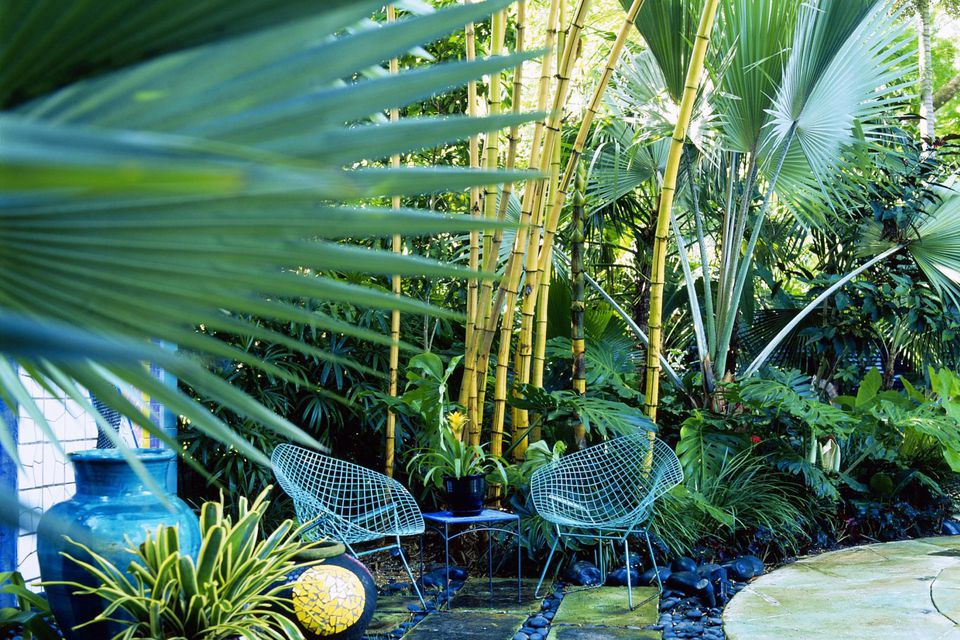 Chairs in tropical garden, Miami, Florida, USA, landscape architect Raymond Jungles