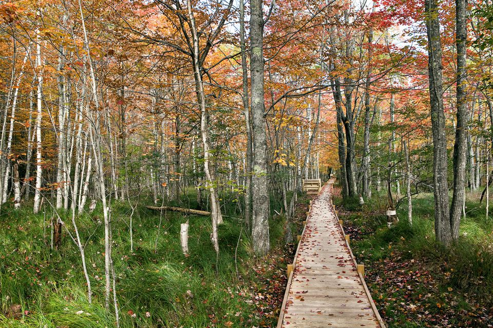 Jesup Trail Boardwalk at Sieur de Monts in Acadia National Park in the fall