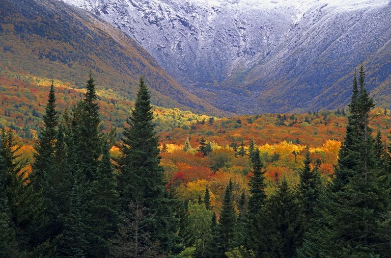 fall trees and mountain