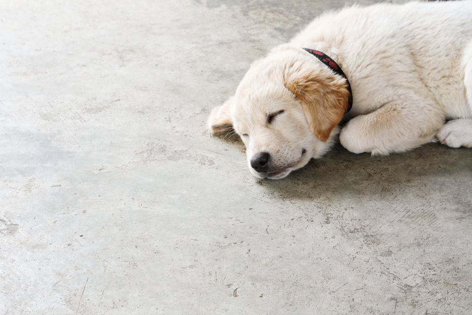 Dog laying on concrete floor
