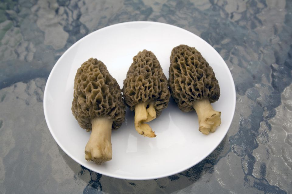 Three wild morel mushrooms on a plate