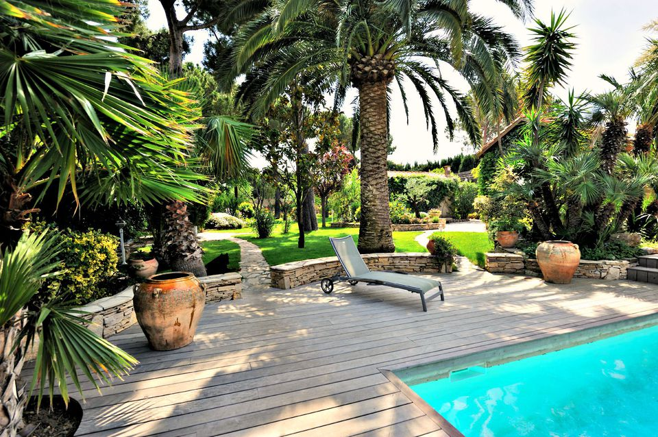 The best trees for pool landscaping for Pool show okc