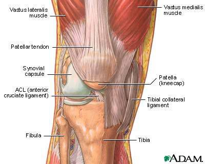 knee pain and injury in weight training, Cephalic Vein