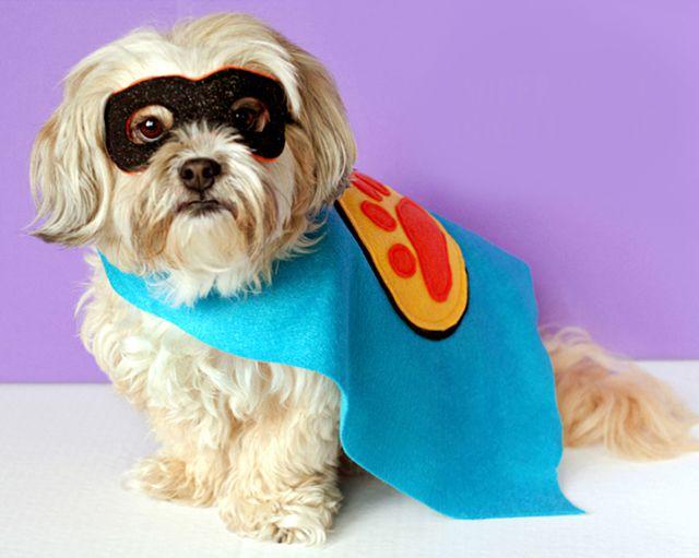 DIY Superhero Costume For Dogs