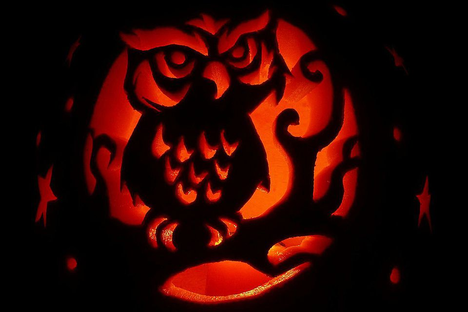Bird pumpkin carving stencils and patterns carved owl pumpking pronofoot35fo Images