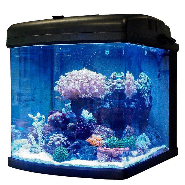 Fish Aquariums Top List Of 1 To 50 Gallon Aquariums