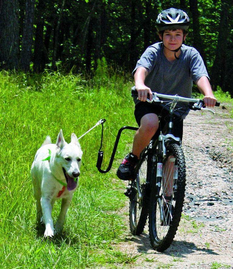 Springer dog walker leash harness for your bike