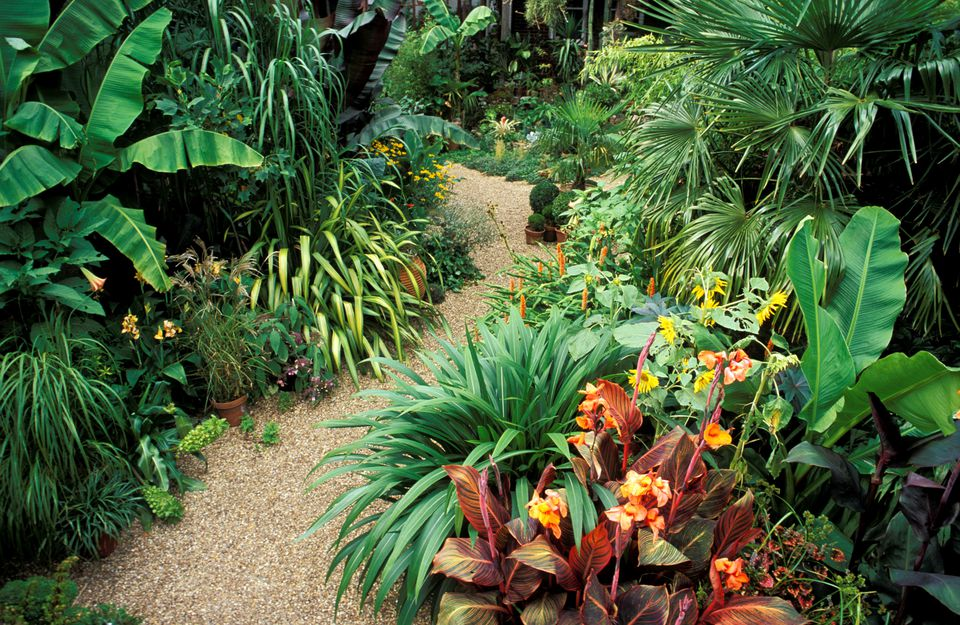 Tropical Flower Garden
