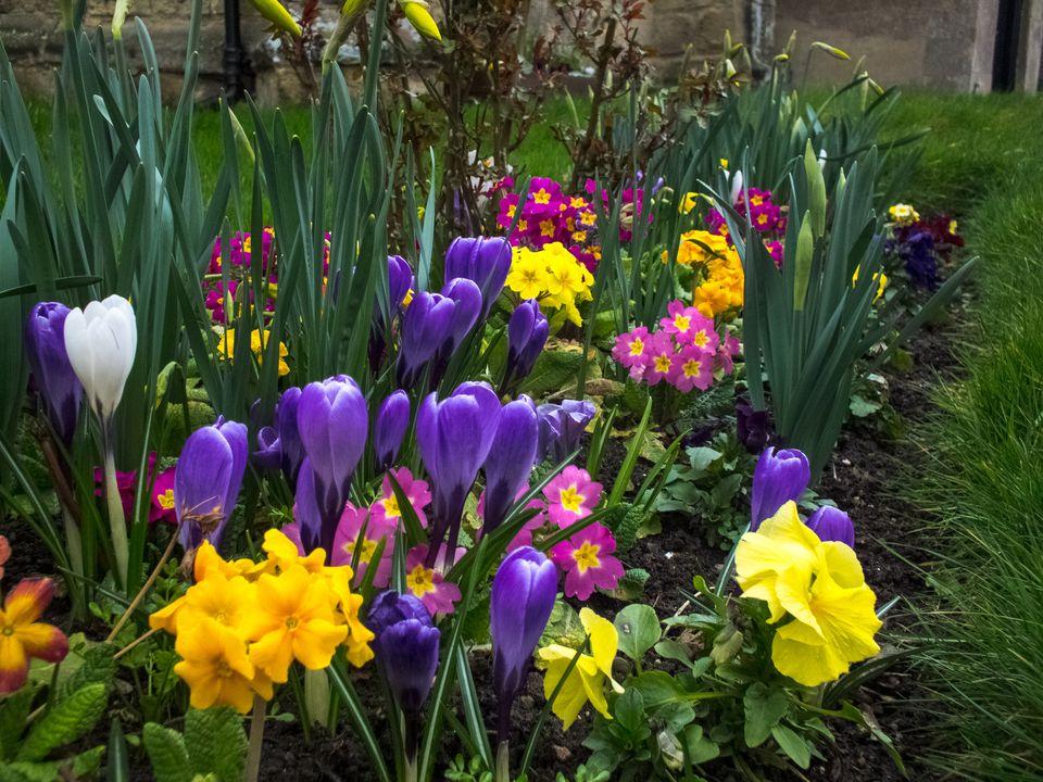 5 tips for a better spring flower garden for Spring garden ideas