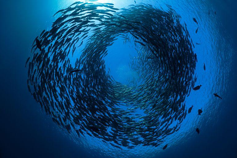 School of Fish / Enso
