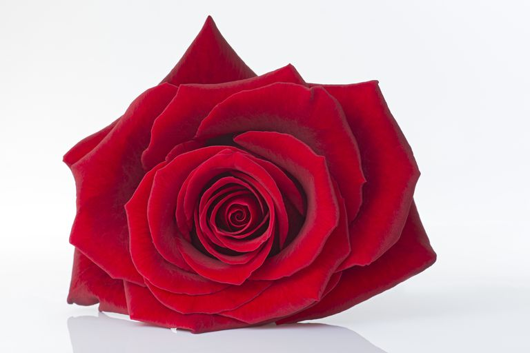 symbolism - red rose