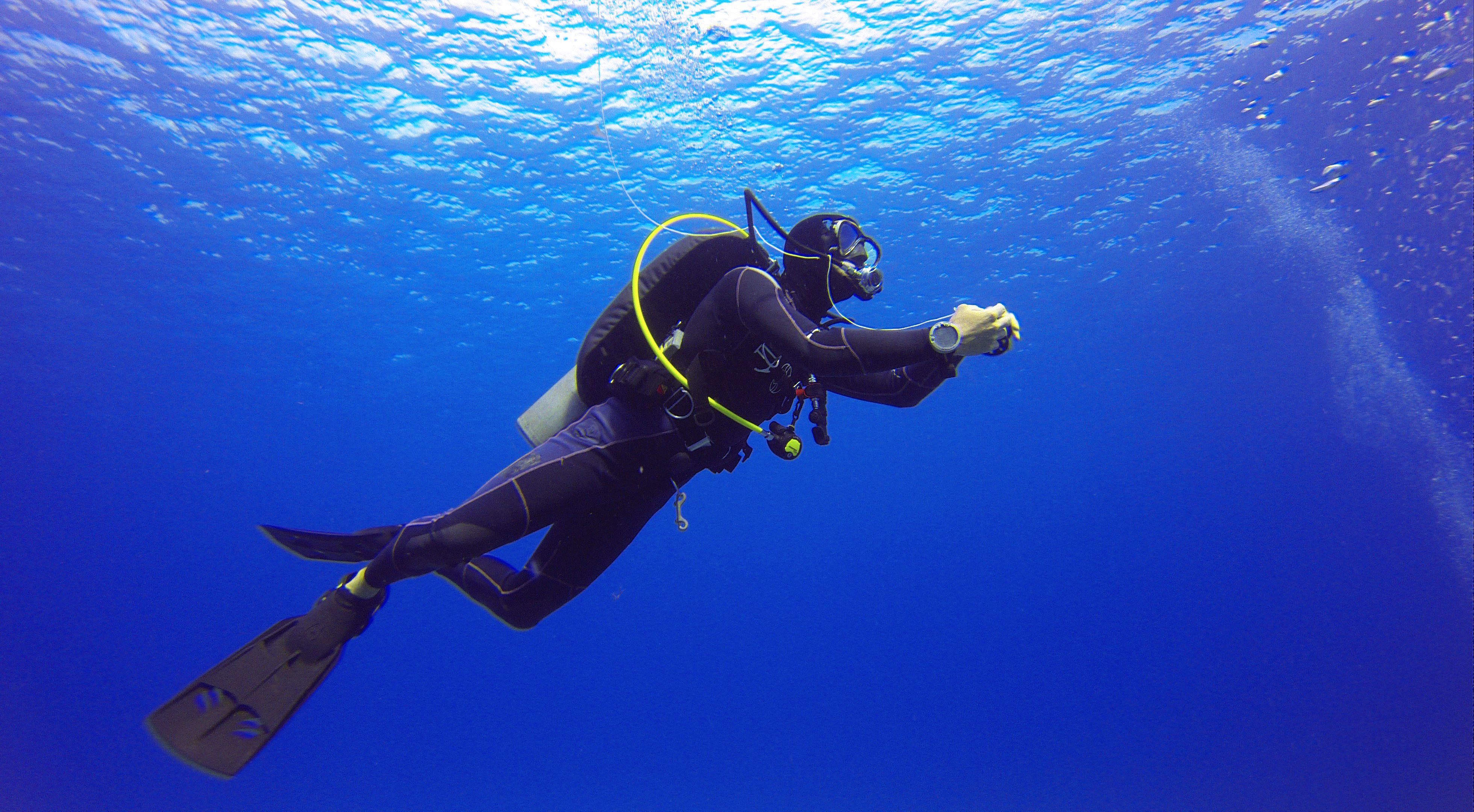 Scuba dive with sharks in an aquarium scuba diver xflitez Choice Image