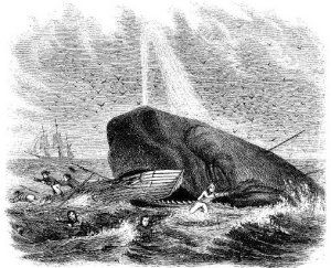 whale attacking