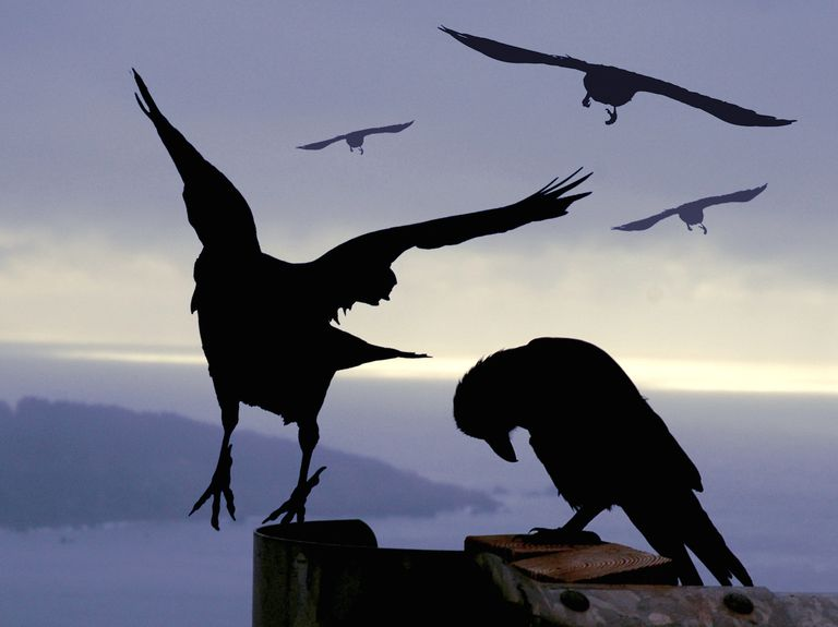 Ravens_1500.jpg