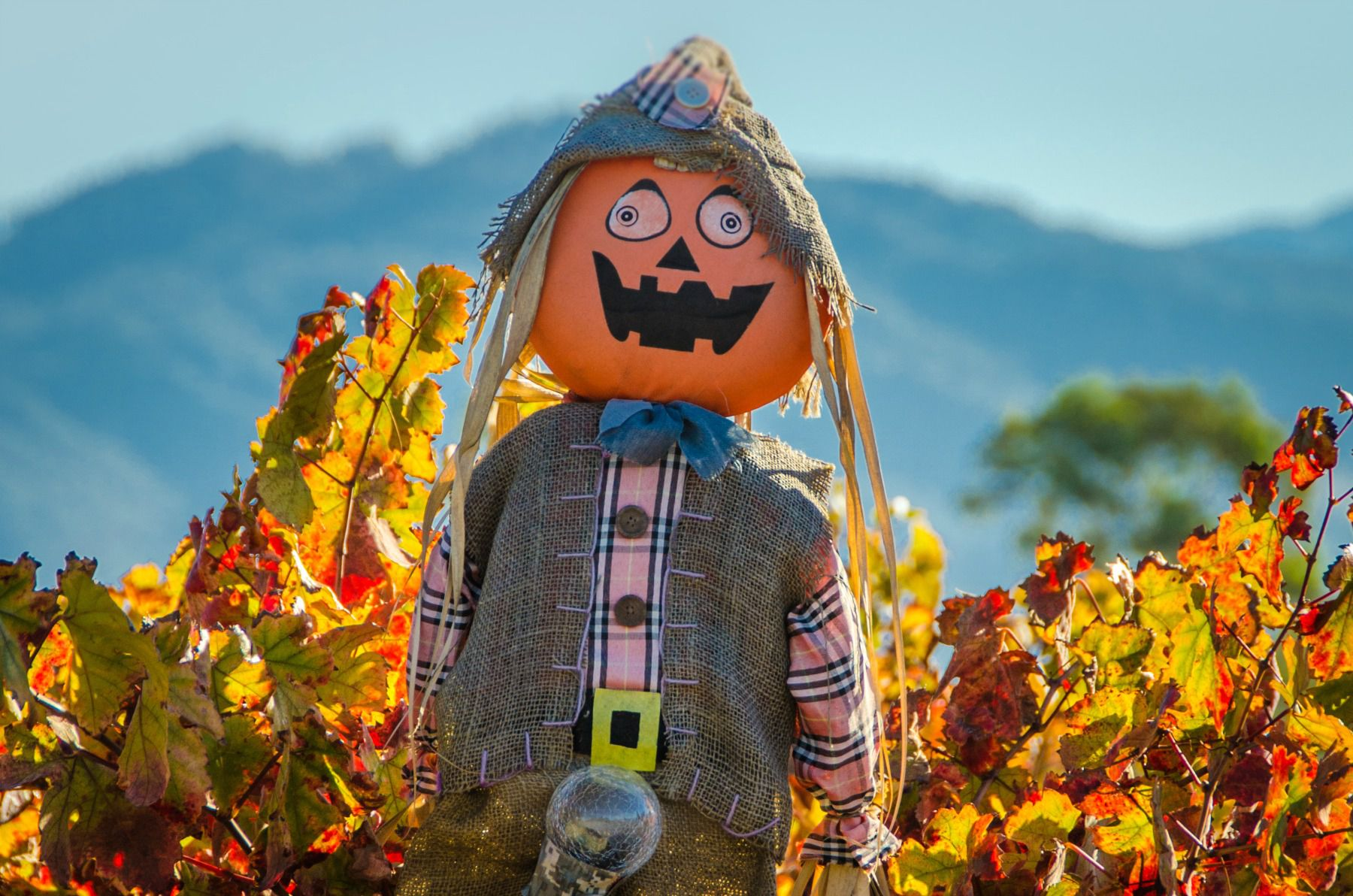 Best Fall Foliage Drives In Northern California