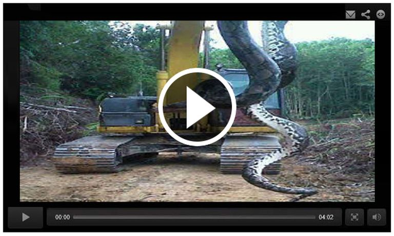 800 Pound Snake Pulled Out of Lake in Chicago Illinois