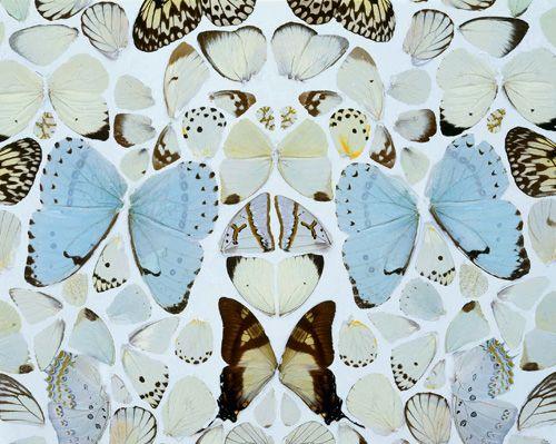 Mariposas de Damien Hirst