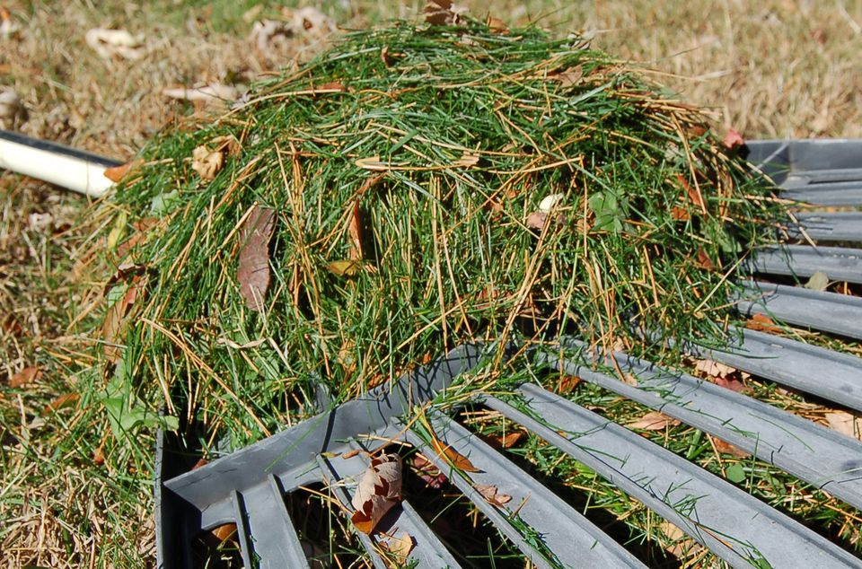 Image of grass clippings.