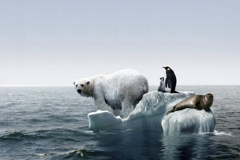Painting of polar bear and penguin balanced on small patch of ice surrounded by ocean