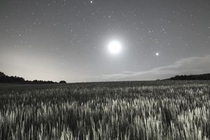 Wheat field illuminated by the moonlight