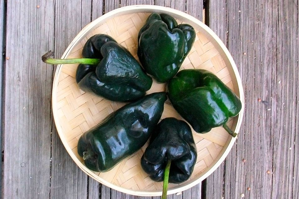 Poblano Chile Peppers