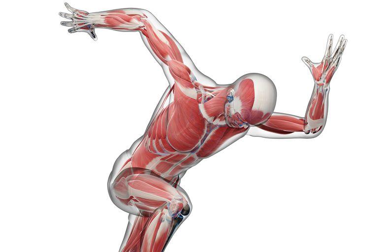 A sprinter