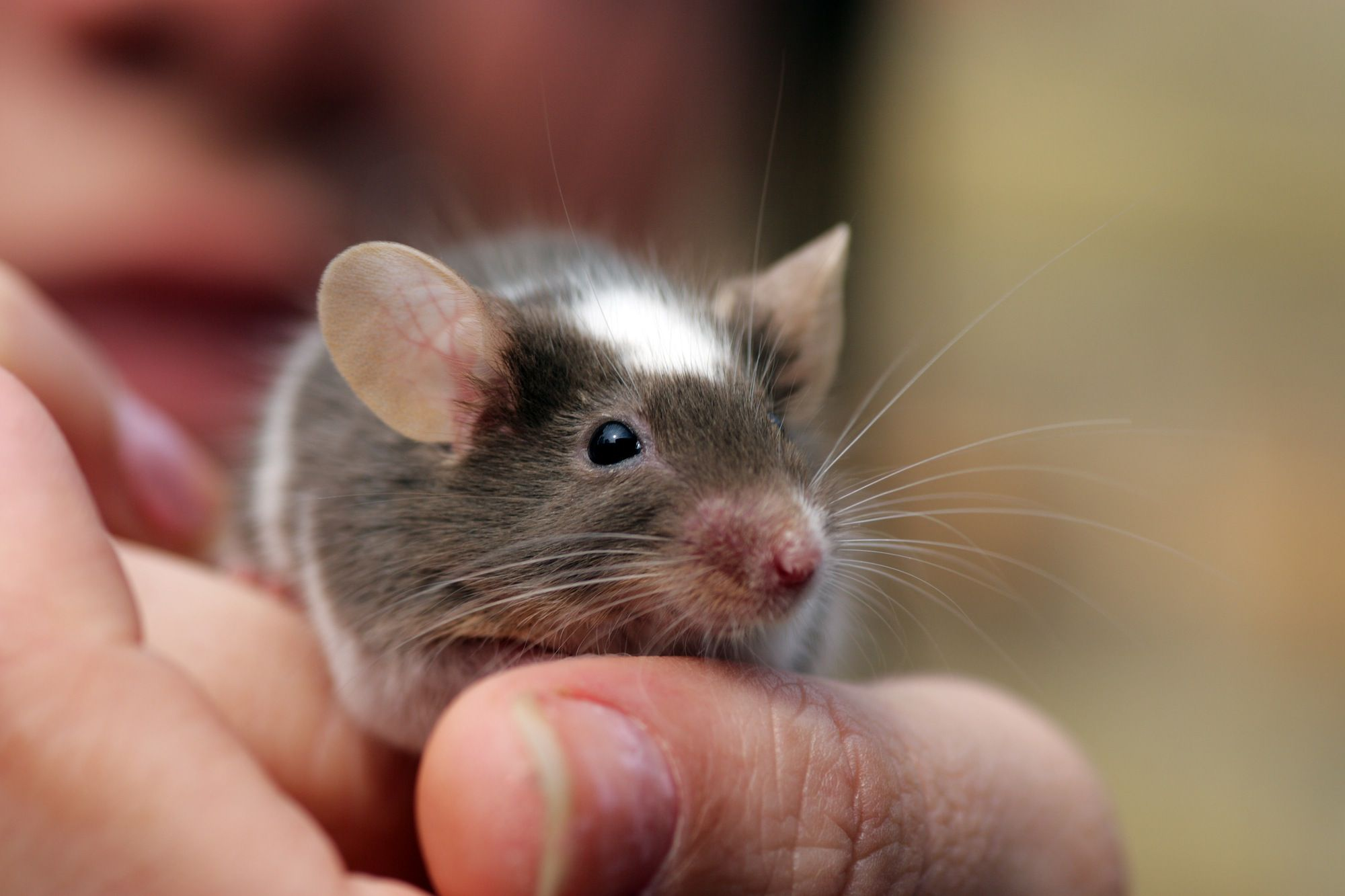 Everyday Care For Mouse Teeth