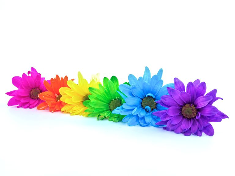 How to make colored flowers Where did daisies originate