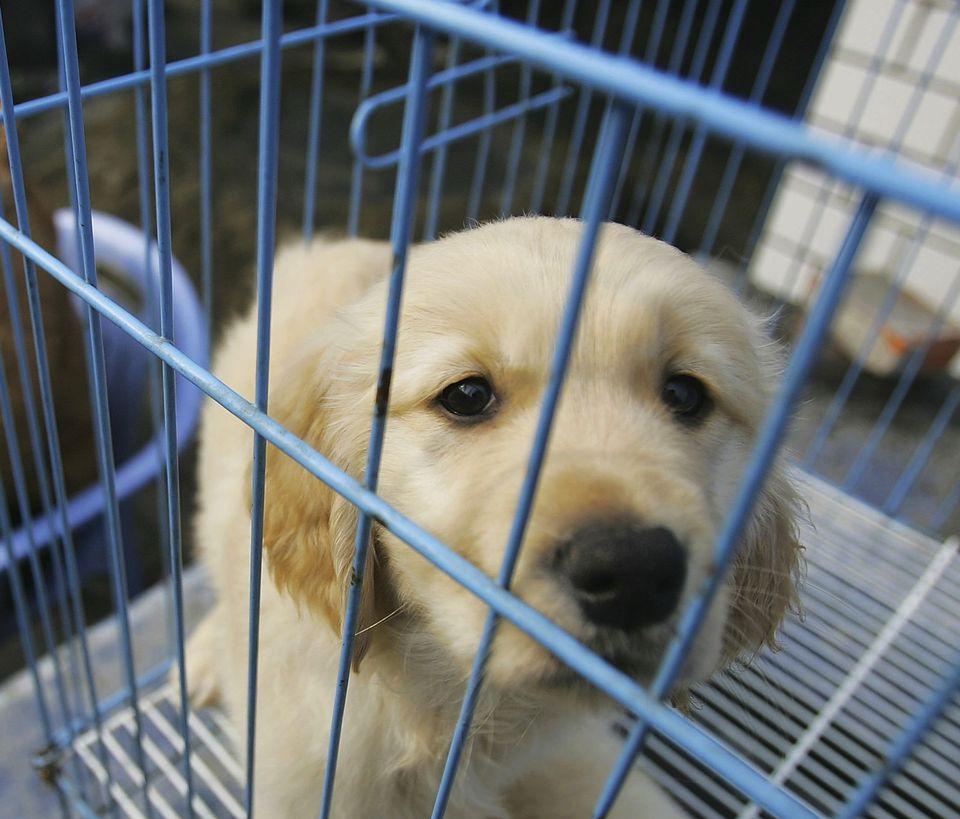 Can You Make Money As A Dog Breeder