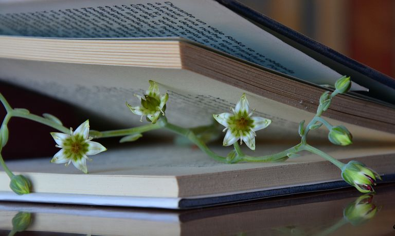 book and flower