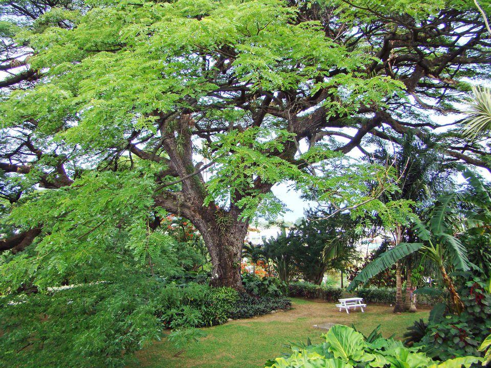 Caribelle Batik Plantation, St. Kitts