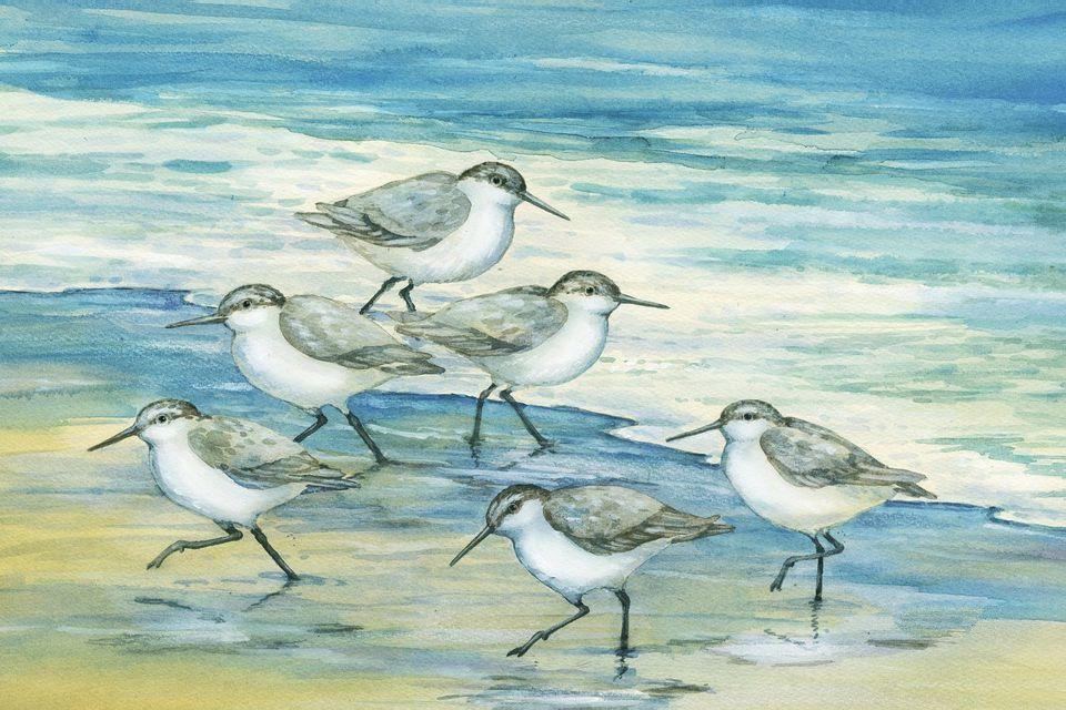 Adorable seabird artwork for coastal bedroom.