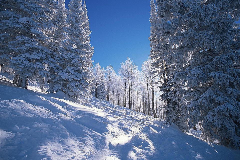 Fresh snow at Steamboat ski area in Colorado USA