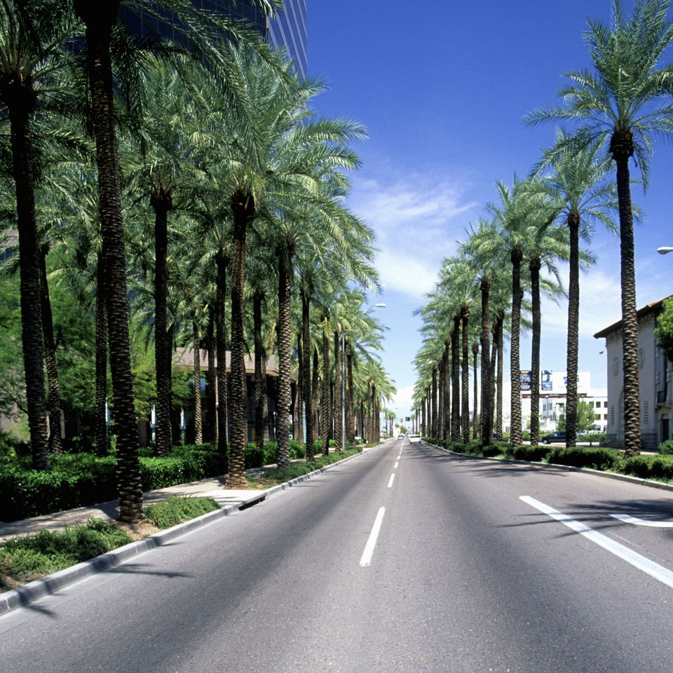 Palm tree lined street, Phoenix, Arizona