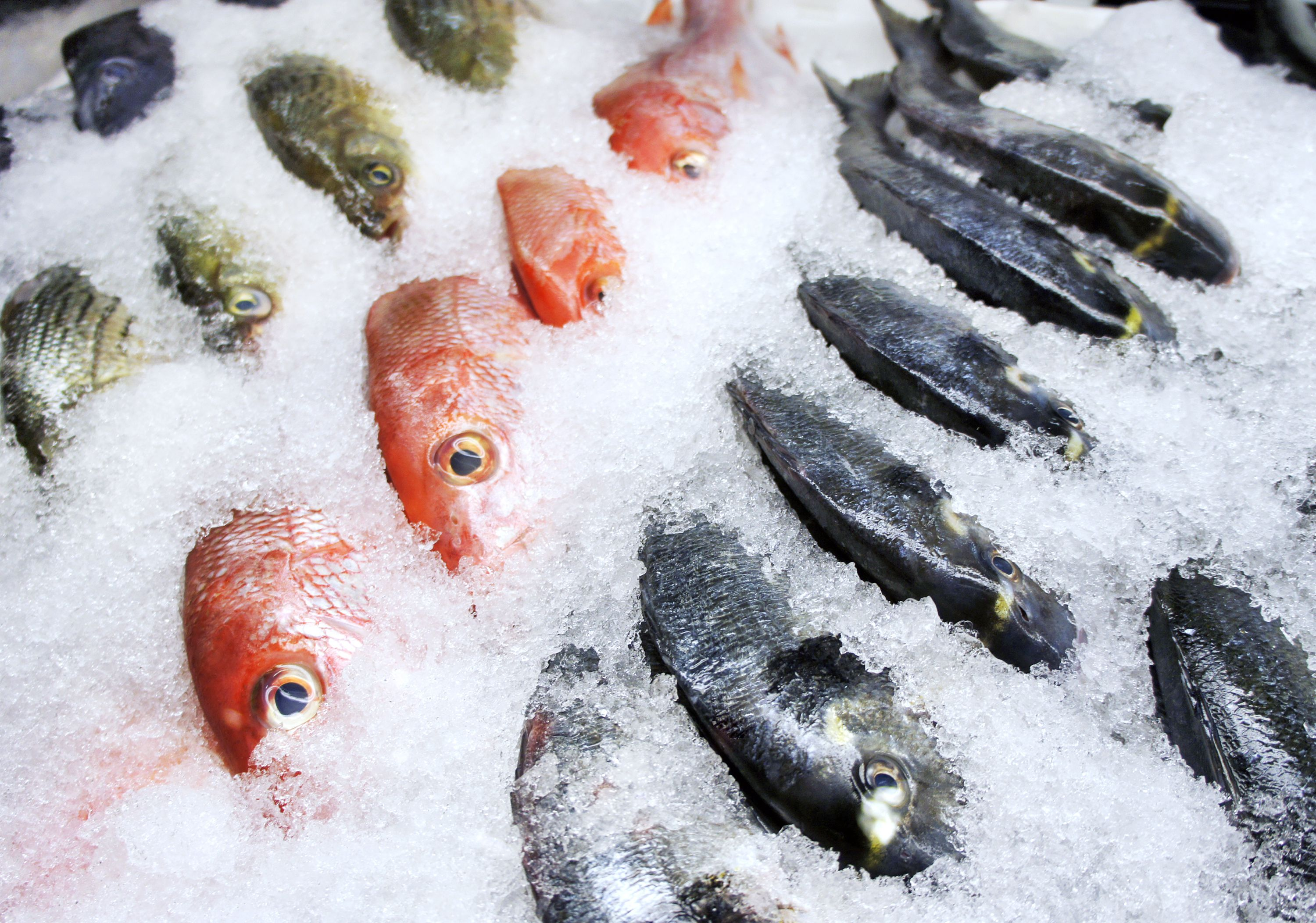 how to freeze fish tips and methods