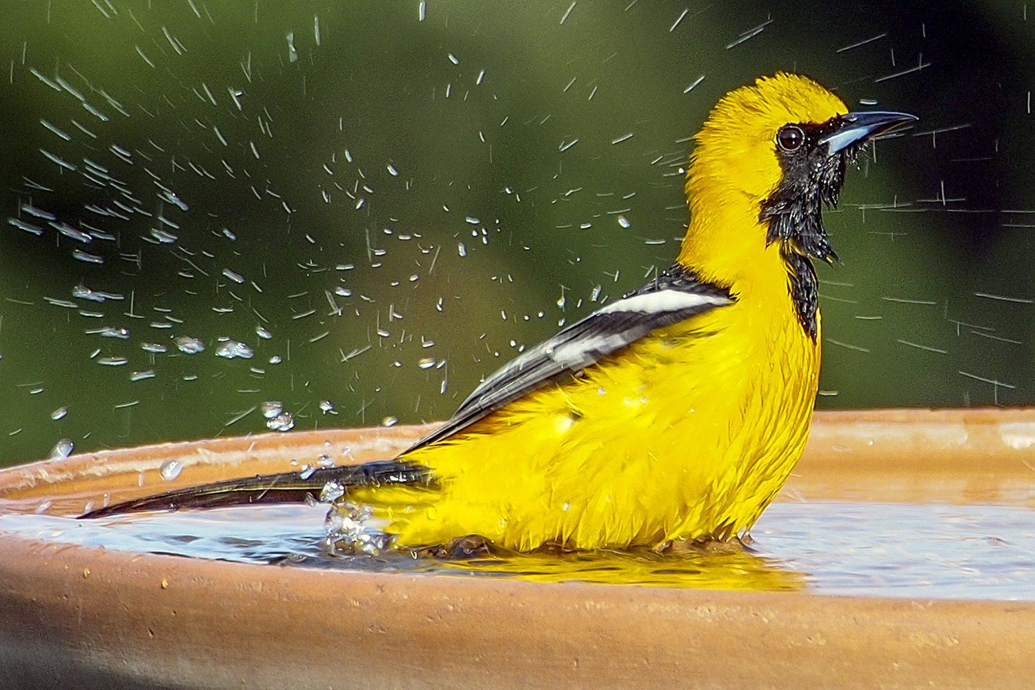 How To Attract Birds With Water
