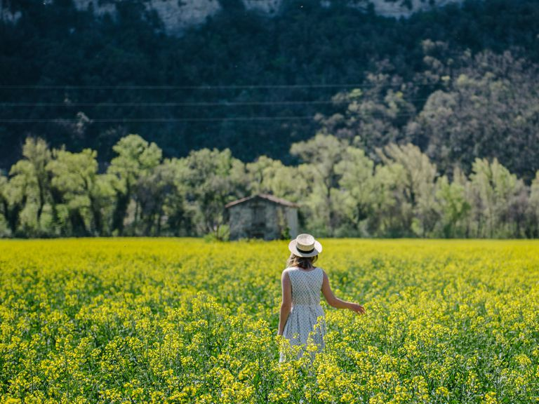 Woman walking through a rapeseed field, Valensole, Provence, France