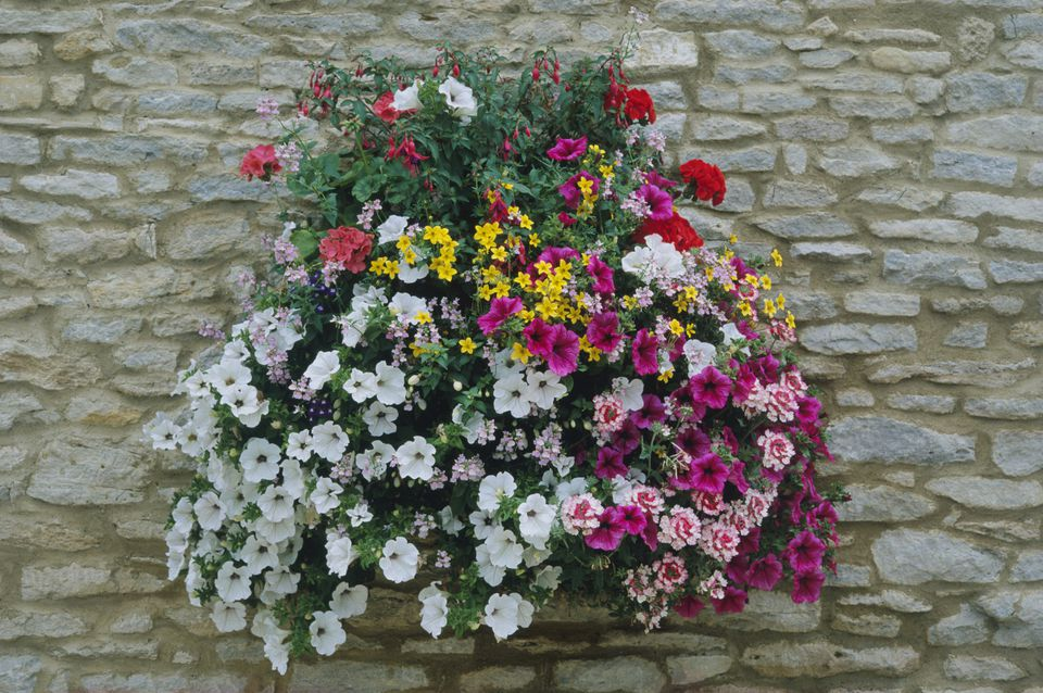 Hanging Flower Basket Maintenance : Flowering hanging basket ideas