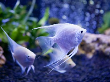 Platy Colors, Patterns and Fin Types