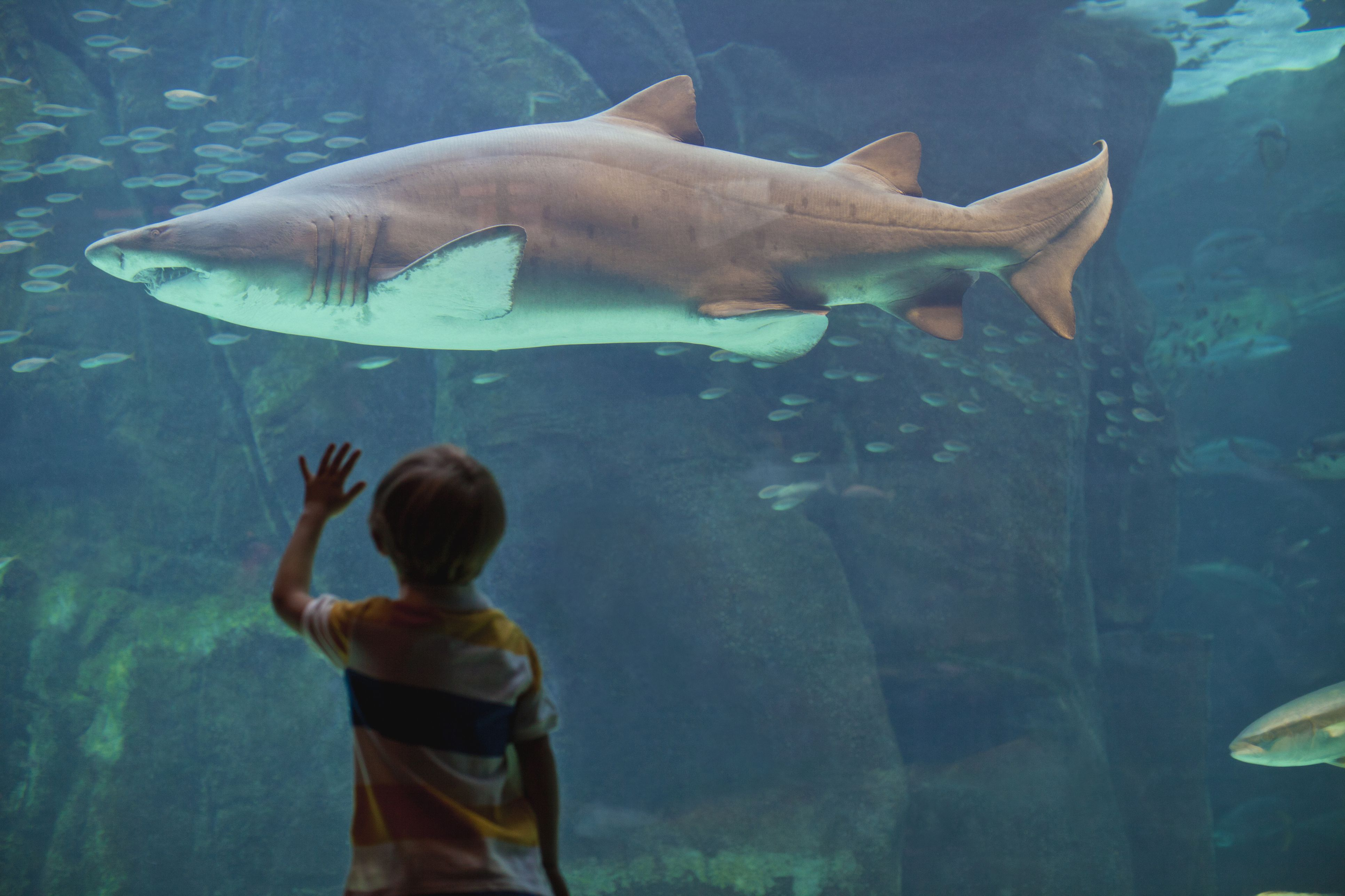 the top arguments against animal rights why do animal rights activists oppose aquariums