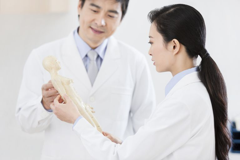 doctors studying acupuncture model