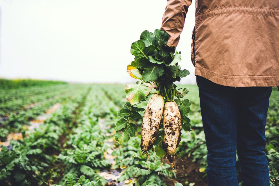 Man holding the radish