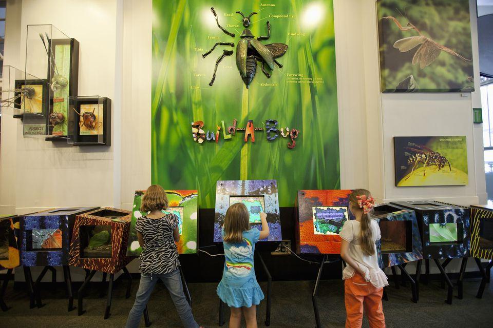 Three girls using interactive displays to 'build a bug' at Audubon Insectarium.
