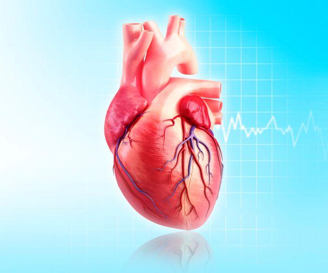 El latido cardíaco