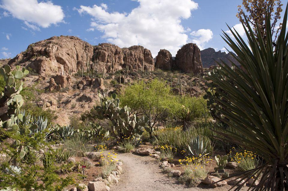 Cactus garden at Boyce Thompson Arboretum. Superior, Arizona, United States, North America