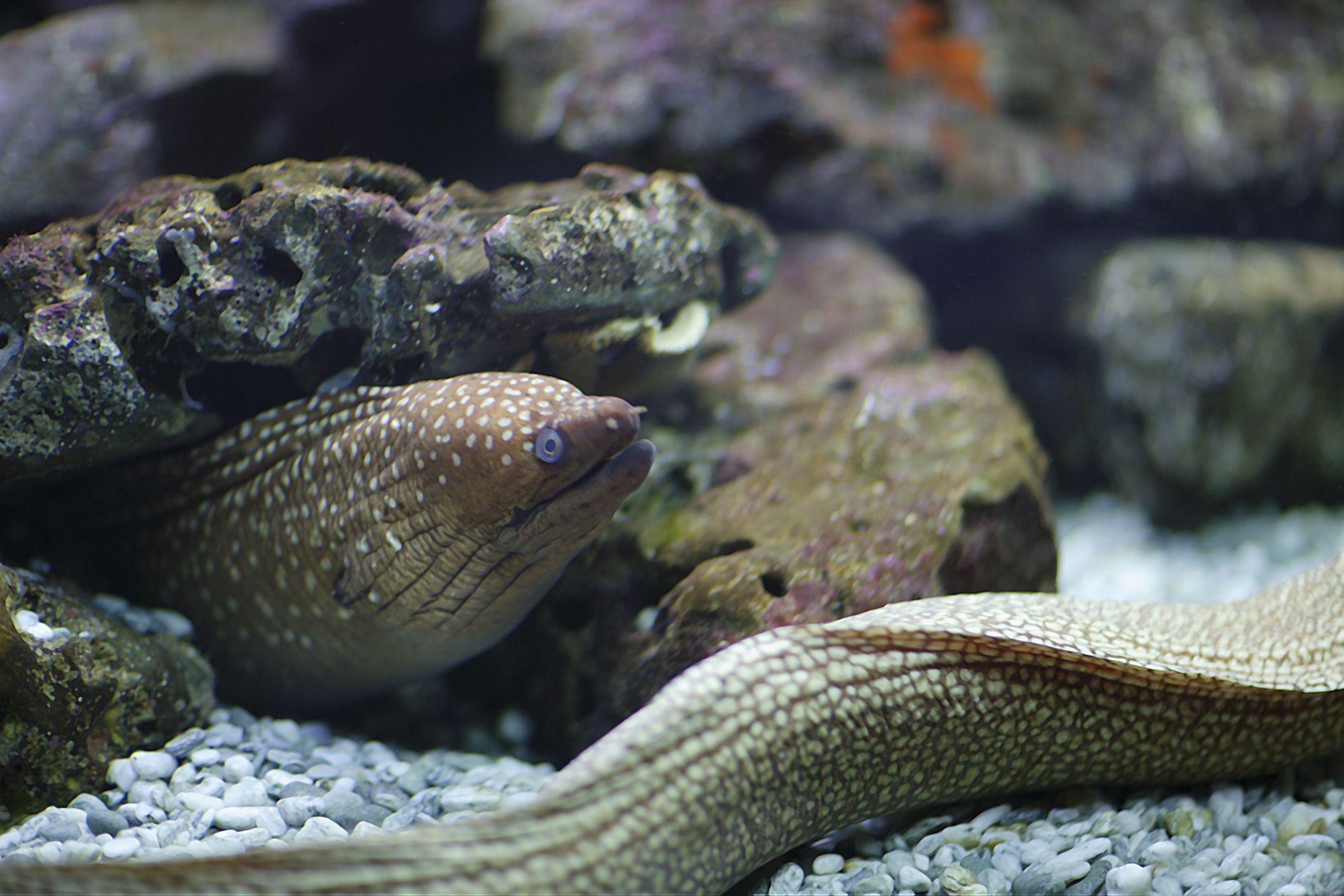 GettyImages-76509824-599efbdfb501e800113c3952 Frais De Aquarium Recifal Complet Concept