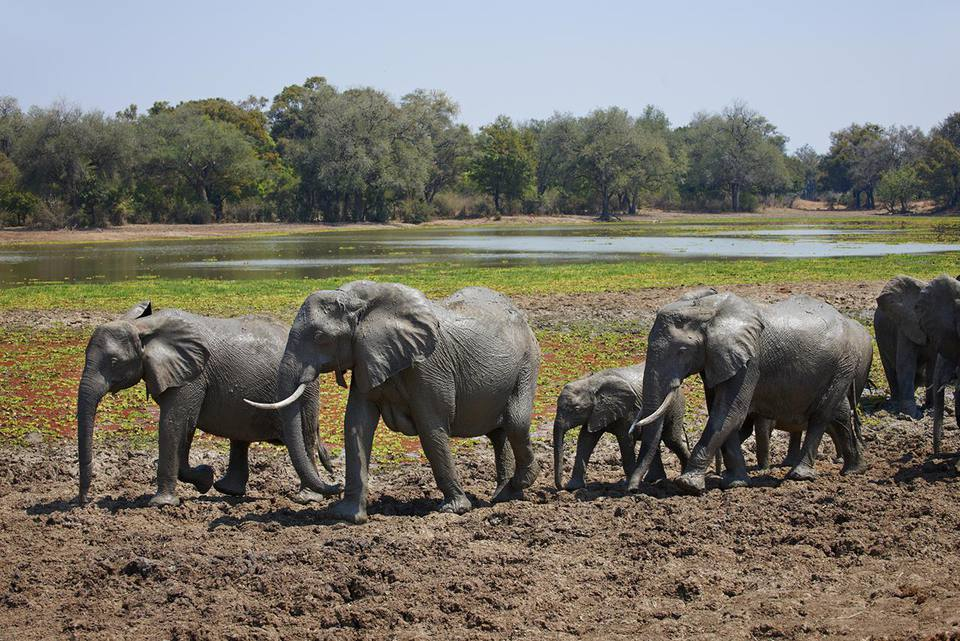 Zambia Travel Guide Essential Facts and Information
