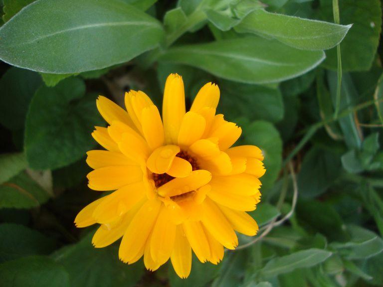 beautiful flower opening