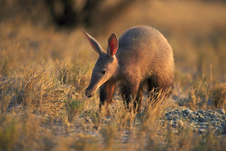 The 21 Basic Mammal Groups
