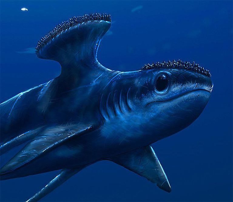 Stethacanthus - Facts ...
